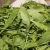 Rocket Salad Anti-Cancer Compounds Increase During Shelf Life