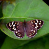 Butterflies Are Benefitting From Environmental Action