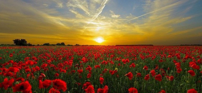 Reading Remembrance Sunday 2019 Information