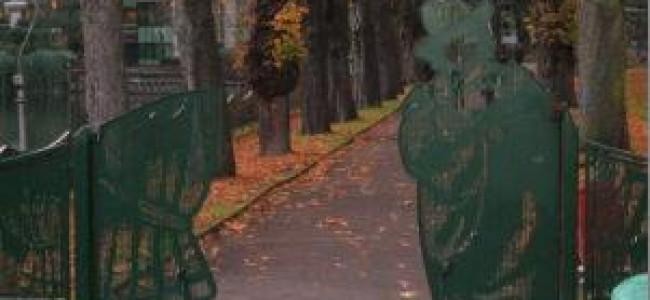 Chestnut Walk Tree Replacement Begins