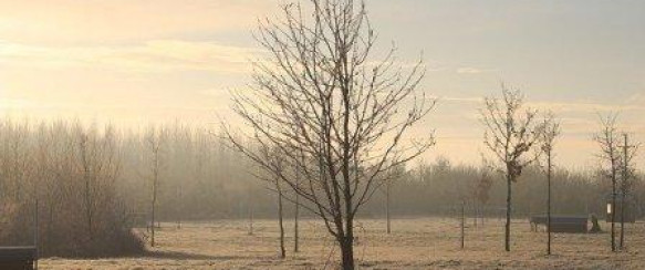 Woodland Trust Launch Free Tree Packs Scheme For Schools and Communities