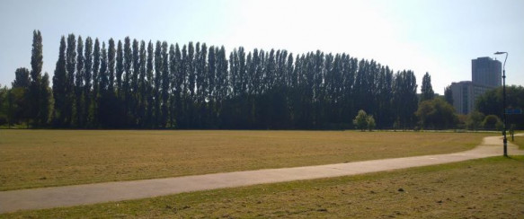 Work to Protect Lombardy Poplar Trees at Christchurch Meadows Begins this Month