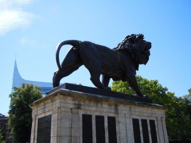 pic 1 - lion
