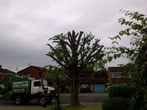 Bennetts Tree Care ltd