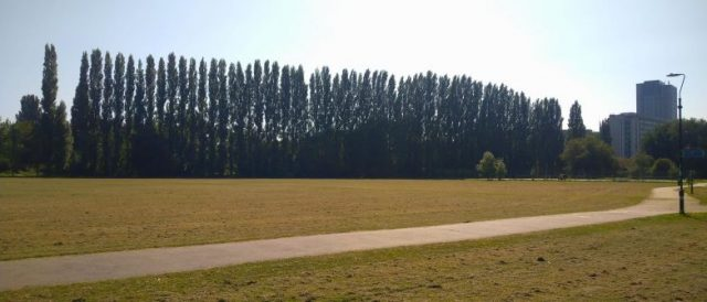 Lombardy Poplar Trees at Christchurch Meadows